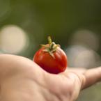 Храненето с чиста храна засища по-бързо и огладняваме по-рядко