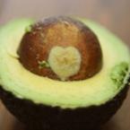 Авокадото – плодът, известен с редица положителни и здравословни свойства
