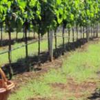 Новият бизнес синдром на Балканите – виното и туризмът стават водеща тема на тазгодишния Балкански винен конкурс и фестивал