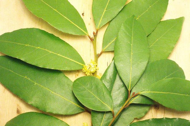 Рецепта с дафинов лист лекува възпаления и рак на гърлото