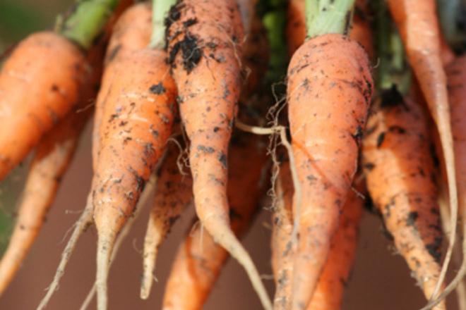 Помагат ли морковите да виждаме в тъмното
