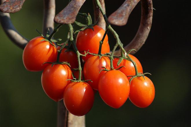 7 ползи от доматите