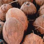 Защо е хит кокосовата вода?