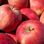Защо да хапваме ябълки всеки ден