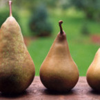Крушата – вкусен плод с много полезни свойства