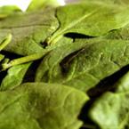 Спанакът - най-полезният зелен зеленчук