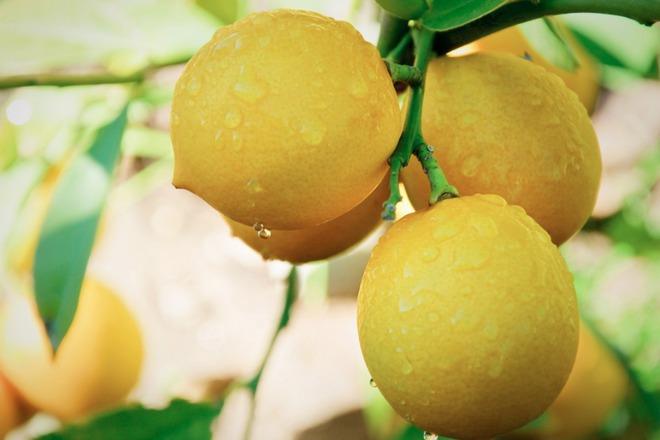 Девет невероятни приложения на лимона