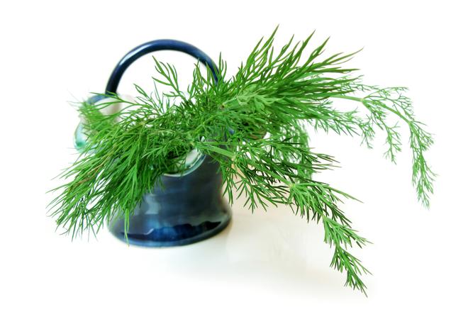 Да съхраним свежестта на зелените подправки за зимата