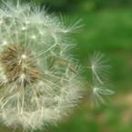 Храни, които помагат срещу алергии