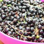 20 плодчета касис = дневната доза вит.С