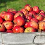 Ябълки за укрепване на организма