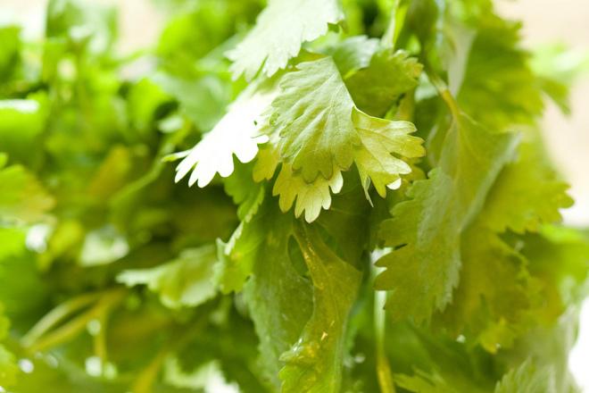 6 билки за борба с токсините