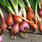 Яжте лук за защита на сърцето и за предпазване от рак