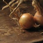 Люспи от лук помагат при бронхит, кожни заболявания и разширени вени