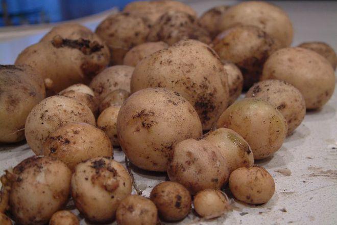 картофа