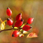 Есенни плодове за здраве и хармония