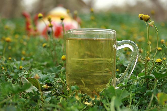 Лечение с билки на възпален далак