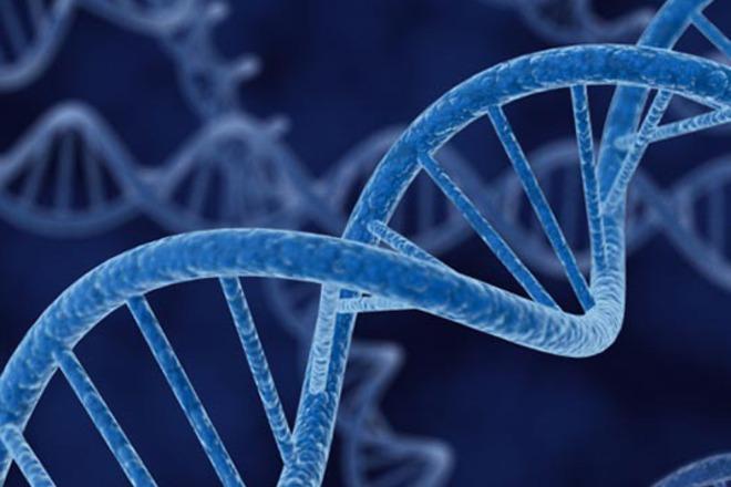 Генът казва, но средата определя